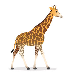 Giraffe walking cartoon animal wildlife vector