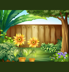 scene with sunflowers in garden vector image
