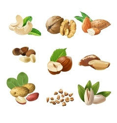 Set icons nuts vector