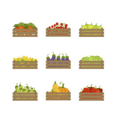 wooden crates with farm vegetables set organic vector image