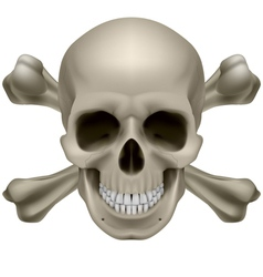 Realistic skull and bones vector image vector image