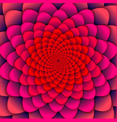 abstract background pink spiral flower pattern vector image vector image