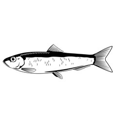 European sprat black and white fish vector