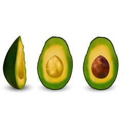 set of realistic green avocado vector image