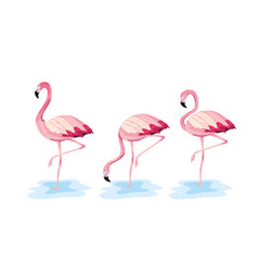 set tropical flemish wild animal vector image