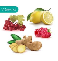Set vitamins to strengthen immunity viburnu vector