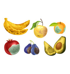 Unfit fruits with skin covered with stinky rot vector