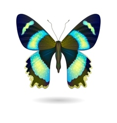 Bright butterfly isolated eps 10 vector