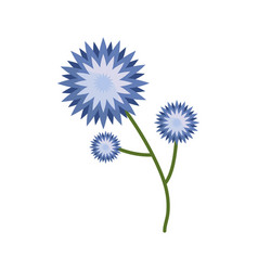Flower star branch spring icon vector