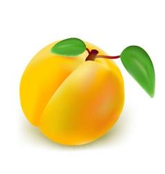 fresh peach vector image