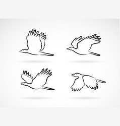 group crow flying on white background birds vector image