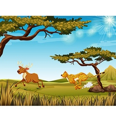 Tiger chasing a deer in field vector