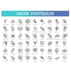 vegetarian healthy food leaf set vector image