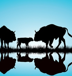 Bisons family vector image