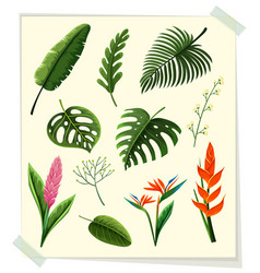 Different kinds of leaves and flowers on paper vector
