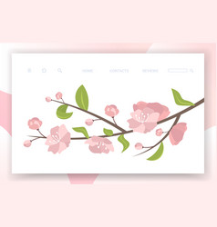 pink sakura flowers with leaves on blooming branch vector image