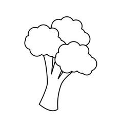 broccoli vegetable icon vector image