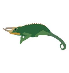 Iguana on white background vector