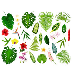 tropical exotic plants and flowers leaf vector image
