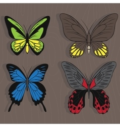 Big realistic collection of colorful butterflies vector image