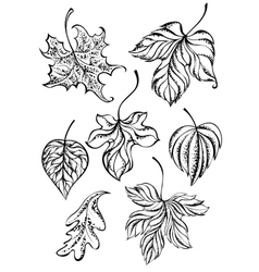 Set of Contour Leaves vector image vector image