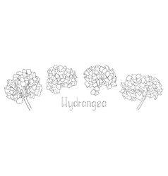 Collection hand drawn vector
