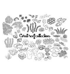 Collection of coral reef elements vector