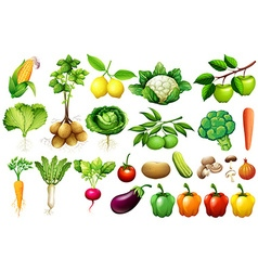 Various kind of vegetables vector image