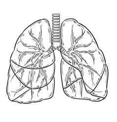 lungs sketch vector image