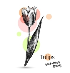 Tulips flower for wedding or birthday card vector image vector image
