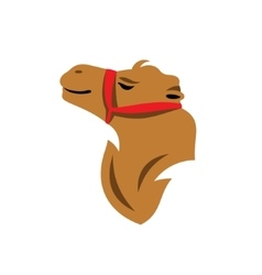Camel Head Cartoon vector image