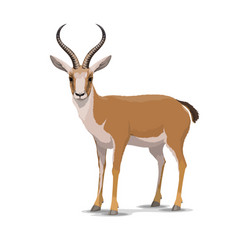 Cartoon goitered gazelle animal vector