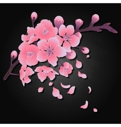 Graphic sakura flowers vector