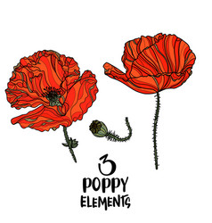 poppy flowers design elements vector image