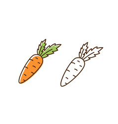 set fresh organic carrot in colorful and vector image