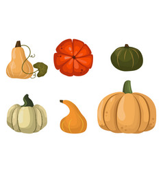 fresh orange pumpkin vegetable isolated vector image vector image