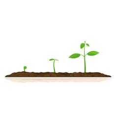 Growing plants progress vector
