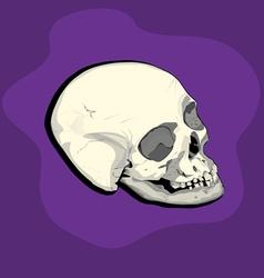 Male skull vector