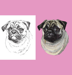 portrait cute funny dog pug vector image