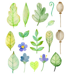 set watercolor flowers and green leaves vector image
