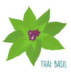 essential ingredient fresh thai basil leaf vector image vector image