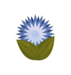star flower bud with leaves vector image