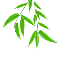 Bamboo leaves pattern with space for your text vector