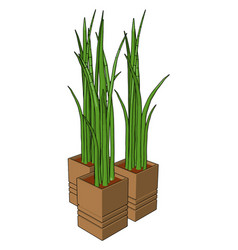 grass in a pot on white background vector image