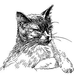 Sketch a cunning cat vector