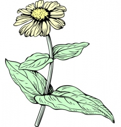 yellow flower vector image