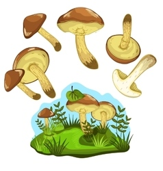 Greasers mushroom isolated vector