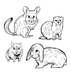Hand drawn pet rodents rabbit hamster chinchilla vector