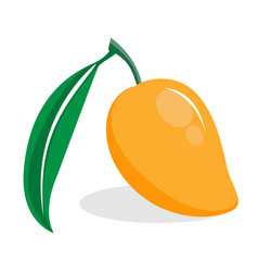 orange flat ripe mango on white background draw vector image