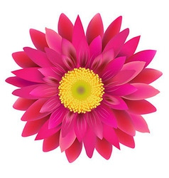 Pink Gerbera vector image